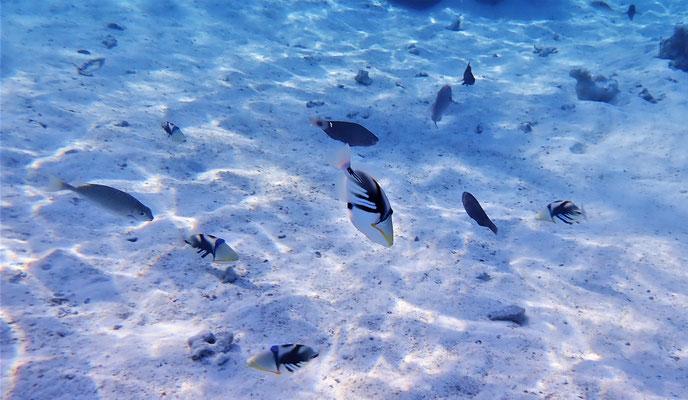 .......auf Bora Bora mit......