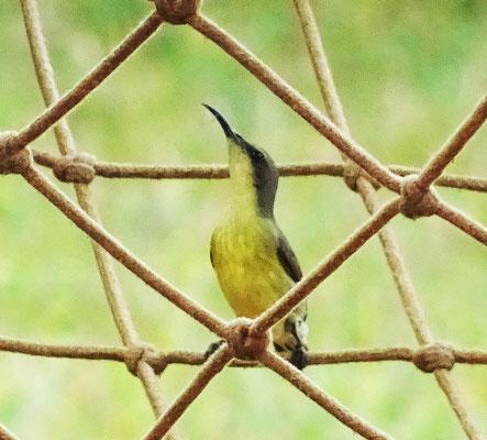 Dieser Kolibri begutachtete...