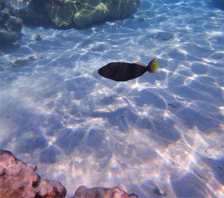 .......faszinierenden Unterwasserwelt.