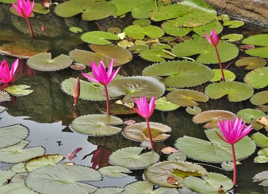 Der kleine Teich mit...
