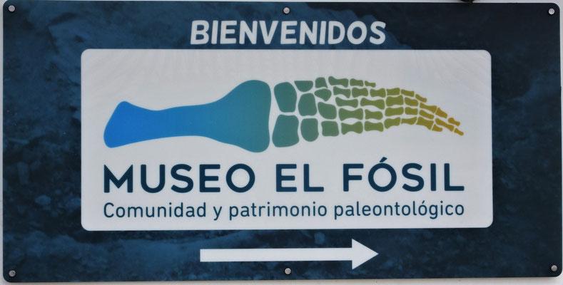 Im Fossil-Museum des......