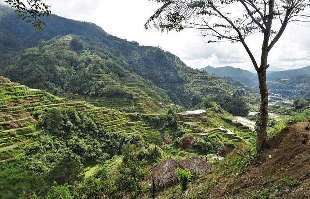 Die Reisterrassen von Banaue.