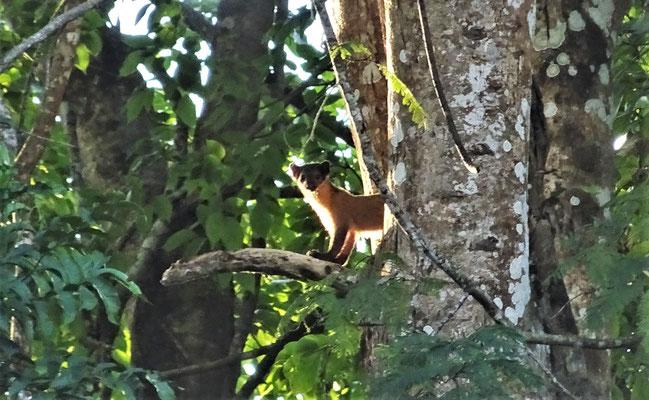 In einem Baum entdeckt.