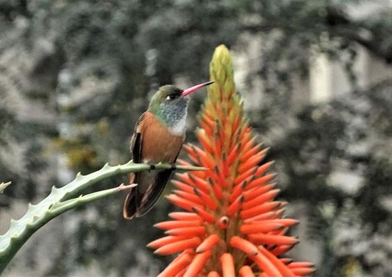 Auch einen Kolibri....