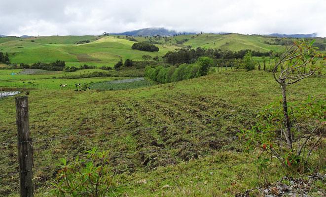 Die grüne Hügellandschaft mit unserem.....