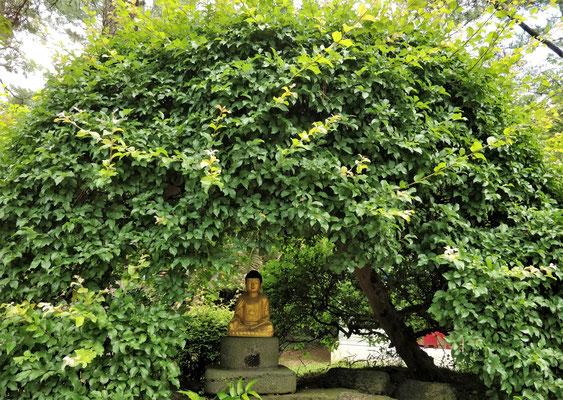 Ein kleiner Buddha unter dem Baum.