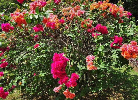 Schöne Blumensträucher.