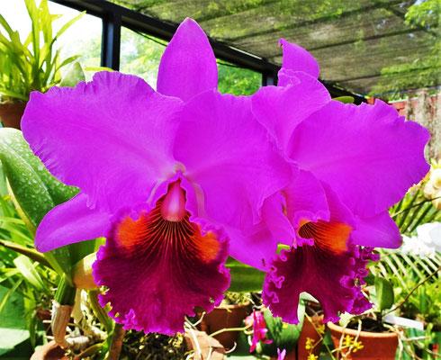 Im Orchideenhaus