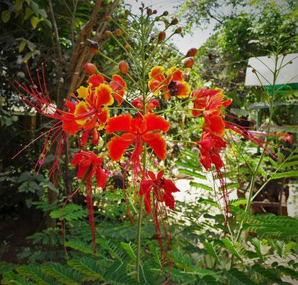 Schöne Orchide