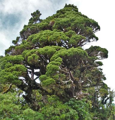 ....im Taranaki National Park.