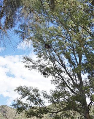 Auf diesem Baum....
