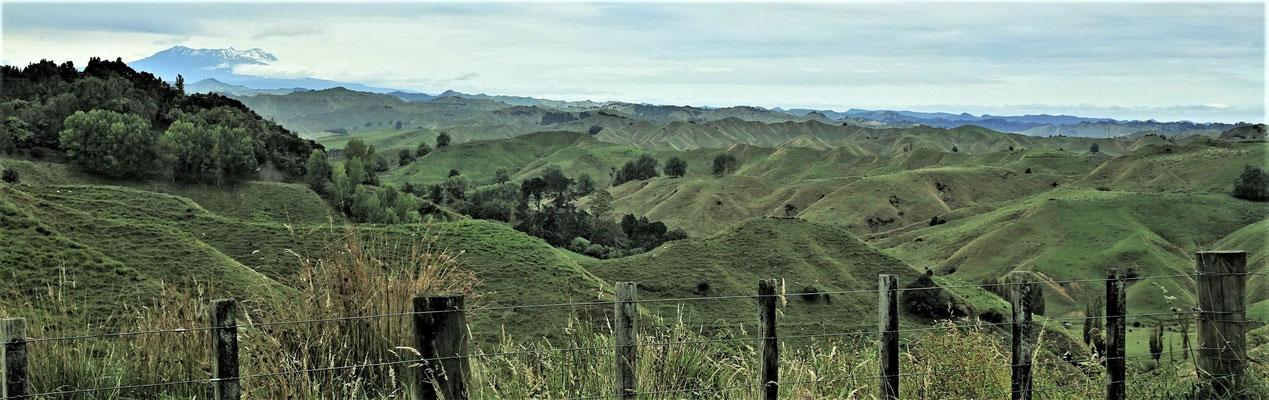 ....fuhren wir durch diese Hügellandschaft.....