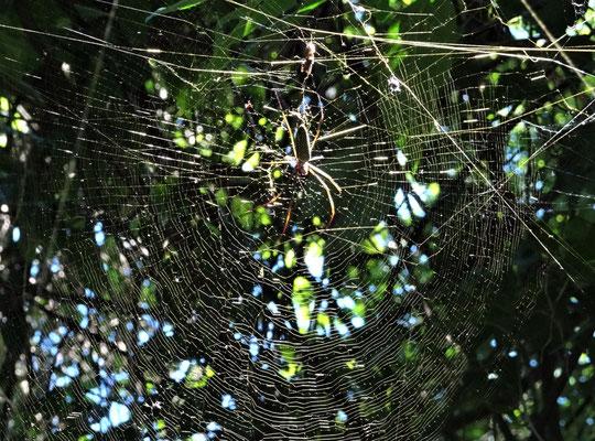 .....und Spinnen.