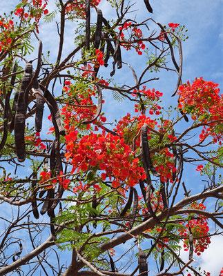 Ein Baum in Blütenpracht.