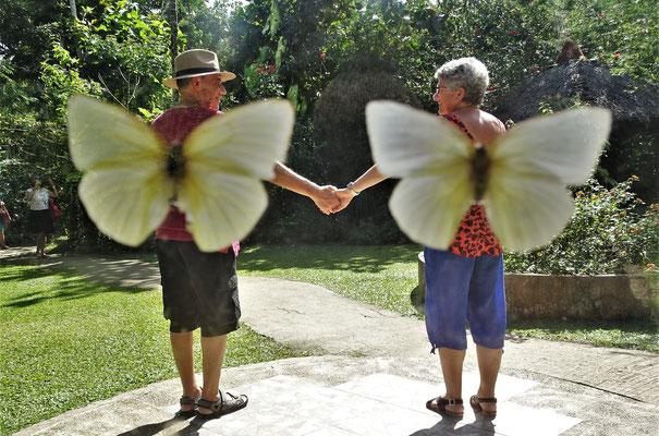 Das sind 2 besondere Schmetterlinge.