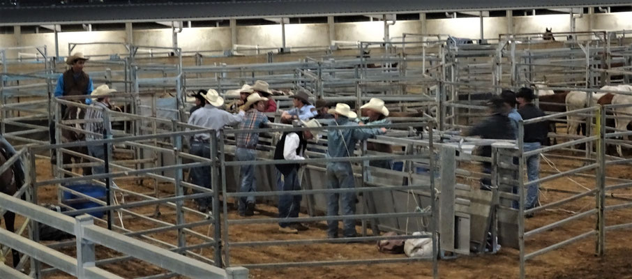 Hier werden die Rinder....