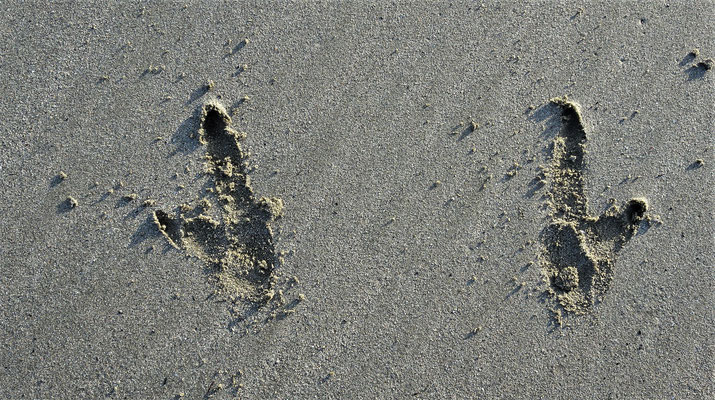 Kängi Spuren im Sand.
