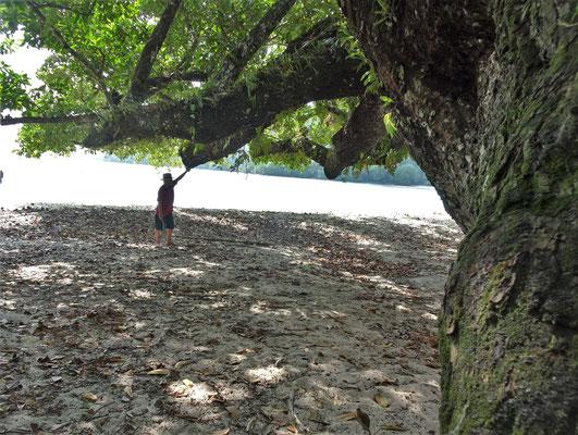 Der Naval Poisen Baum.....