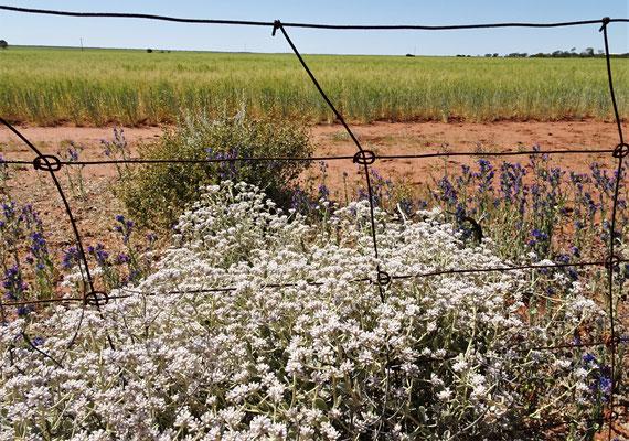 Riesige Kornfelder sahen wir auch.