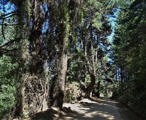 .....durch den Wald.....