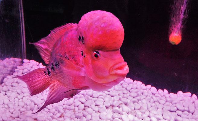Einige spezielle Fische....