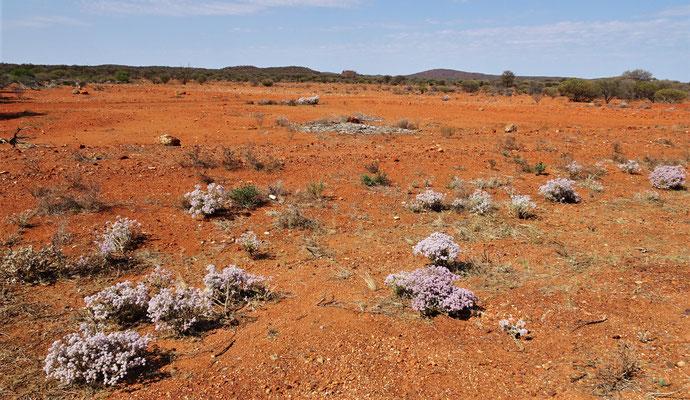 Die Weite des Outback.