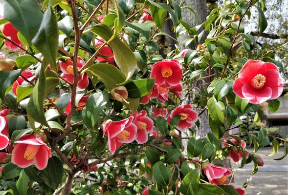 Blumenpracht im Garten.
