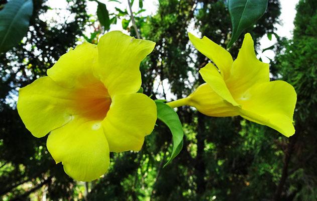 Schöne Blumenpracht in......