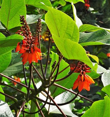 Schöne Blütenpracht auf einem Baum