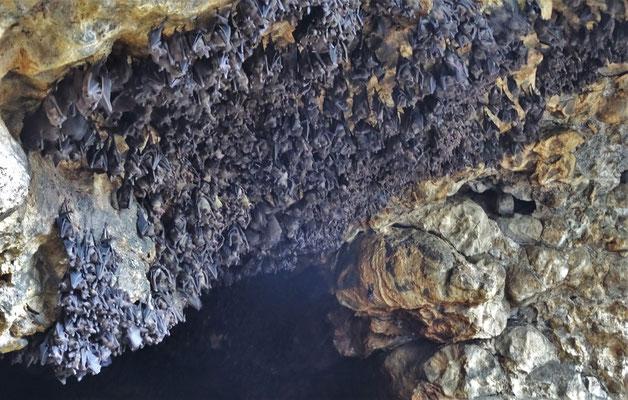 ...mit der Fledermaus Höhle.