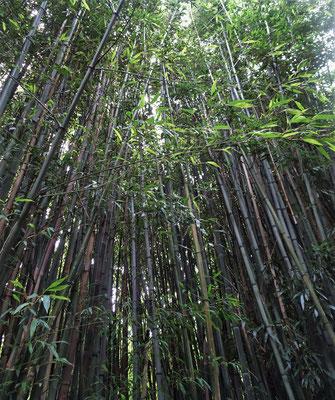 ....mit dem Bambus.