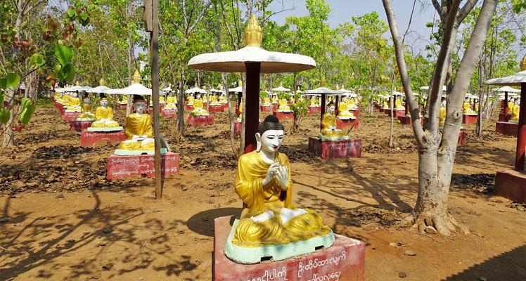 ....und die 1'000 Buddhas und Bhodibäume darum.