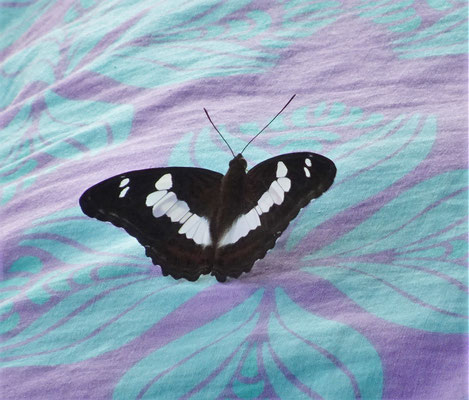 Ein Schmetterling landet auf unserem Bett.
