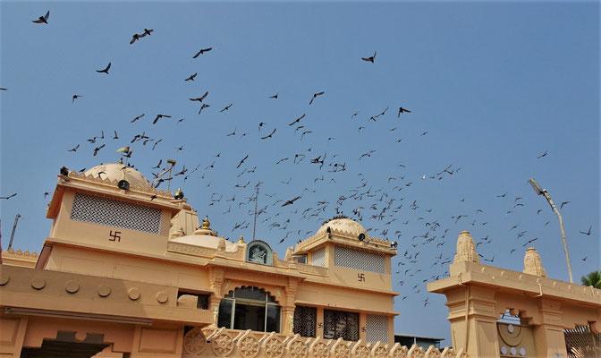 Die vielen Tauben im Tempel.