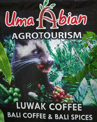 Der Luwak Kaffee, teuerster Kaffee der Welt, der aus dem Kot der Schleichkatzen gewonnen wird.