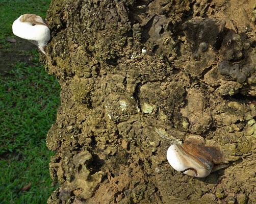 Das ist kein Stein sondern ein Pilz.