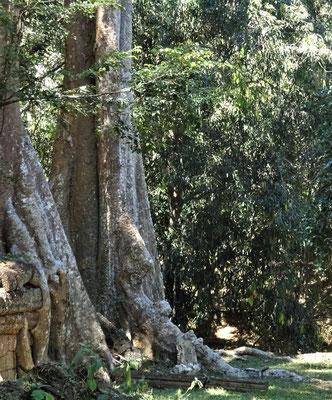 .....Angkor angetroffen haben.