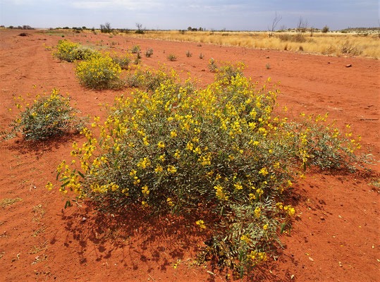Frühling im Outback.