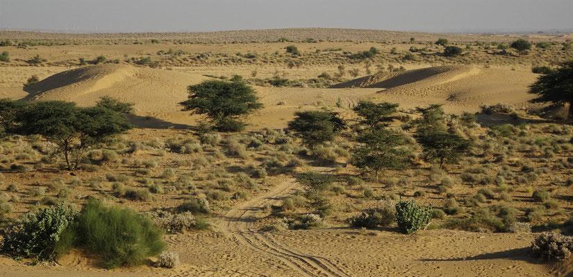 """...in die """"Wüste""""...."""