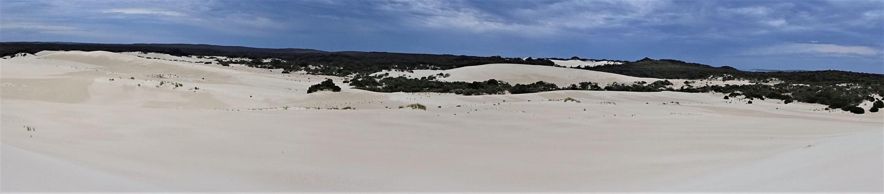 Little Sahara mitten.....