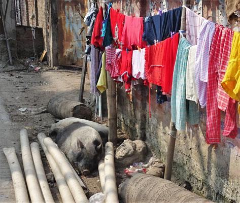 ...mit den Sauwächtern für die Wäsche....