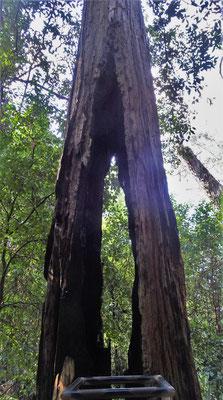 ...von diesem Baum.