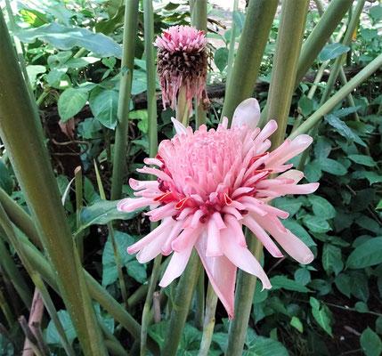 Nicht nur Tiere auch Pflanzen und Blumen gab es zu bestaunen.