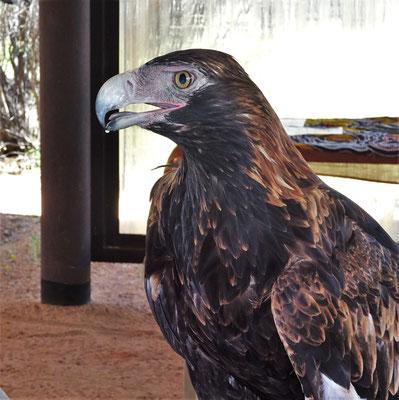 ....mit einem 8 jährigen Adler.....