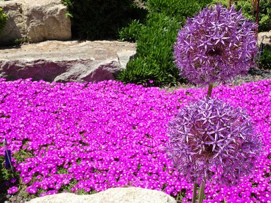 Farbenprächtige Blumen und.....
