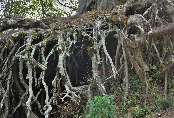 ....alte Baum steht...