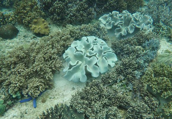 ......Unterwasser Kamera....