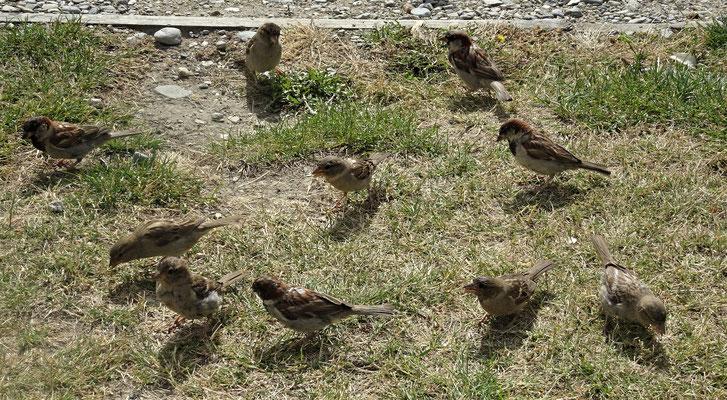 .....und unsere Nachbarn die auf Futter warteten.