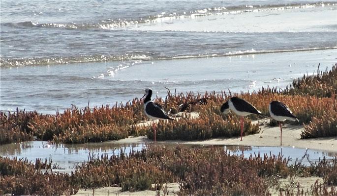 ......Wasservögel.
