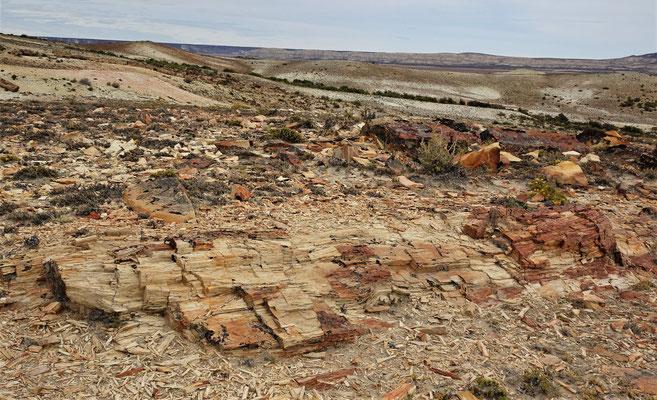 .....sind 150 Mio. Jahre alt und versteinert.